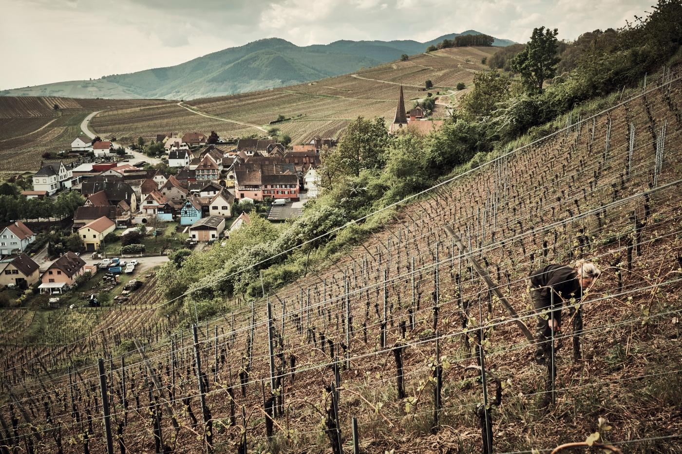 The Wine Princess Landy Love Delius Klasing (2)